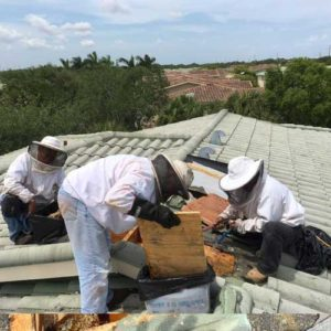 Bee Removal In Florida Gallery