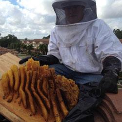 Alpine Farms Bee Removal