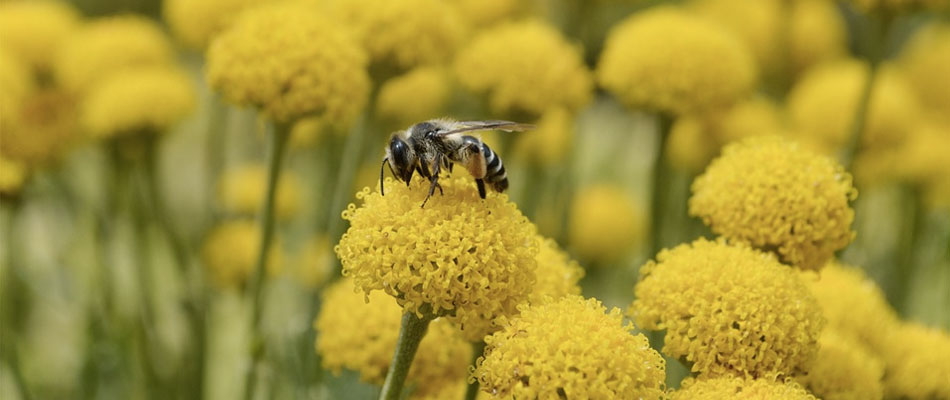 what you need to know about bees