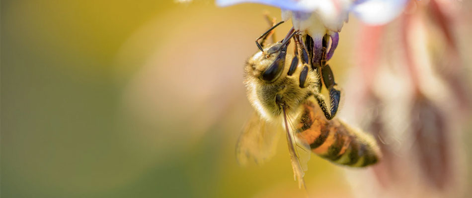 Stuart Bee Removal | Alpine Farms Bee Removal of South Florida