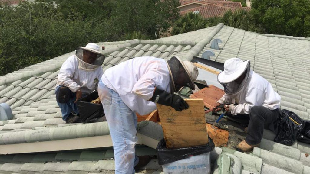 how much does free bee removal cost?