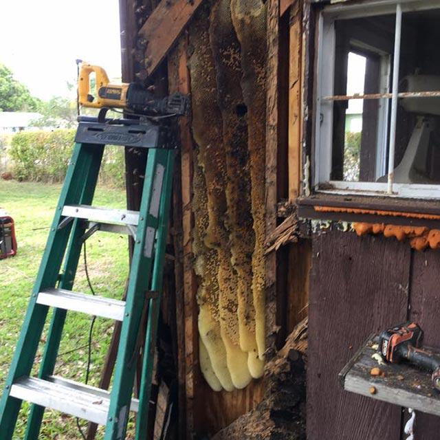 residential bee removal sebastian