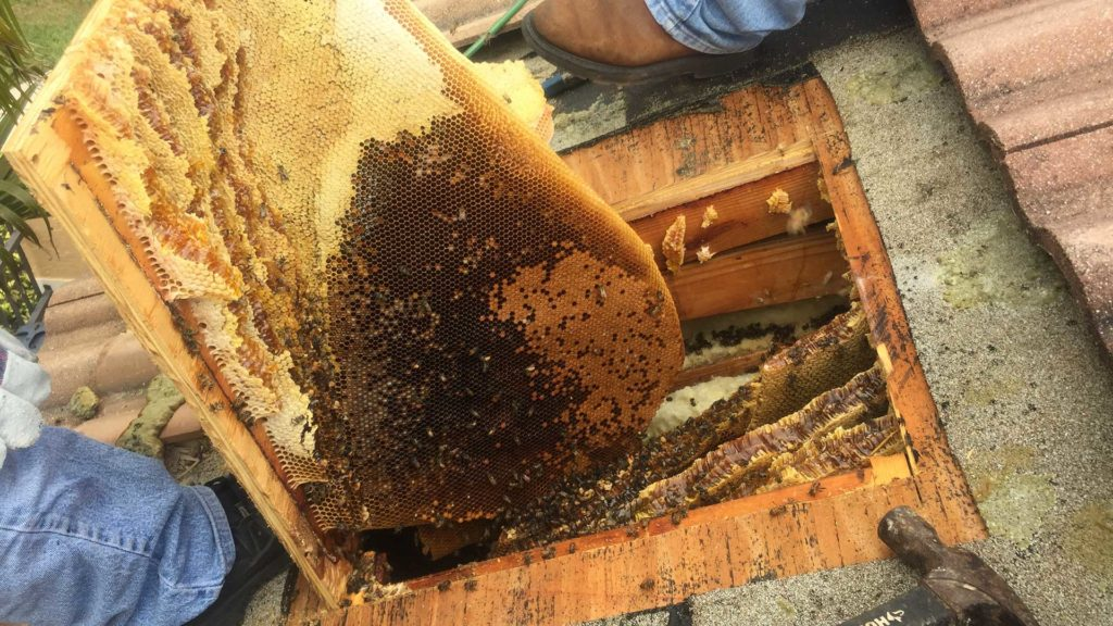 hire bee removal professionals