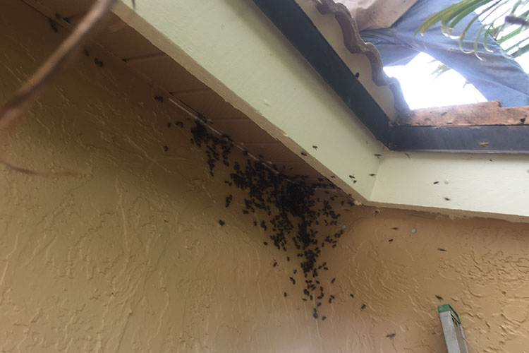 Remove Bees From Soffits
