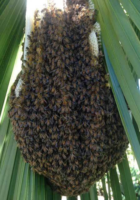 bees-on-palm-leaf